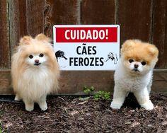 13cachorros que não são exatamente cães deguarda