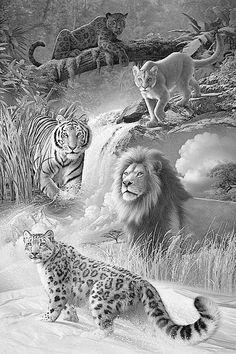 Lion Tiger Puma Leopard Jaguar Coloring pages colouring adult detailed advanced printable Kleuren voor volwassenen
