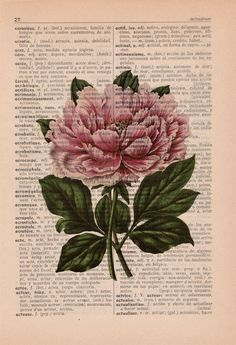 Wand-Dekor Floral Print Wörterbuch print Pfingstrose von PRRINT gift for mom Gift for mom under 10 - Pink peony Print- Wall decor Floral Print Peony flower on book page - wall Art botanical print- Flower art - Art Floral, Book Page Art, Book Art, Flower Prints, Flower Art, Peony Flower, Flowers, Journal D'art, Wall Prints