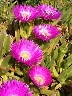 Succulent Seeds, Cacti And Succulents, Planting Succulents, Cactus Plants, Planting Flowers, Organic Compost, Organic Gardening Tips, Flora Garden, Tomato Seedlings