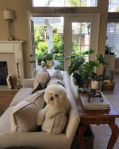 perfect surroundings for this Bichon. Super Cute Puppies, Cute Dogs, Bichon Dog, West Highland Terrier, Dog Memorial, Cute Creatures, New Puppy, My Animal, Dog Pictures