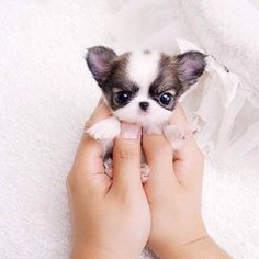Tiny Little Thing..