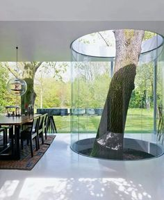Real tree growing underneath home architecture