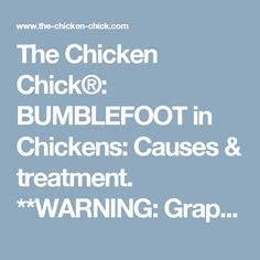 The Chicken Chick®: BUMBLEFOOT in Chickens: Causes & treatment. **WARNING: Graphic Photos**