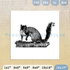 Digital Printable Squirrel Graphic Retro by VintageRetroAntique