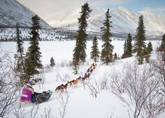 Learn to mush and build your own snow cave on an Alaskan expedition!