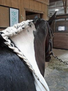 Running Braid, taming a horse mane.