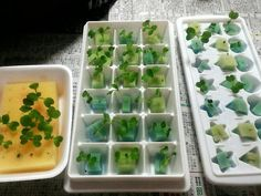 こちらは製氷器を活用して。 Home Hydroponics, Hydroponic Farming, Aquaponics, Water Garden, Lawn And Garden, Home And Garden, Small Balcony Garden, Succulents In Containers, Green Plants