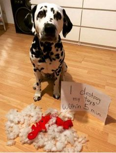 19 Revealing Dog Shaming New Pictures! Dare not to Laugh! cute animals that are not kittehs. Dog Shaming Pictures, Funny Animal Pictures, Funny Photos, Funny Animals, Cute Animals, Baby Animals, Funny Dogs, Cute Dogs, Funny Humor
