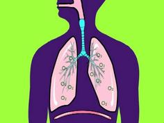 Learning about the Respiratory System video (5 minutes long)
