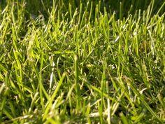 Grünfläche im Park Sonnenlicht