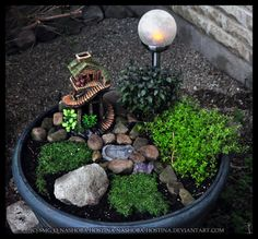 vargamormusings:  This Fairy Garden was made with small herbs that are both edible and magickal, like golden lemon thyme, mini purple basil and corsican mint.  In addition to the witchy little cottage, it has a little pool in the center , a cluster of amethyst crystals, and a solar light to act as the moon.  I imagine this will attract a lot of faeries!  ☾