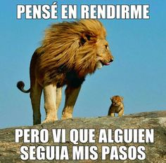 Move over knock knock jokes, it's time for memes now! Read on to see even the majestic king of the jungle can be turned fodder for memes. Spanish Inspirational Quotes, Spanish Quotes, Son Quotes, Life Quotes, Success Quotes, Lion Memes, Motivational Phrases, Life Motivation, Animal Memes
