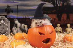 Hogoween - The Adventures Of Humphrey J Hedgehog.