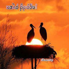 Λόγια σε εικόνες για καληνύχτα - eikones top Movies, Movie Posters, Animals, Art, Greek, Art Background, Animales, Films, Animaux