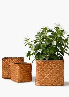 Square Orange Baskets, Set of 3.  Have a plant in a waterproof pot? Drop it in one of these 3 orange stained, woven baskets. One each, sized (Square x height, in inches): 6 1/4 x 5 1/2, 5 x 4 3/4, and 4 x 4. $12
