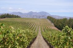 The wines of Waterkloof, Stellenbosch, South Africa