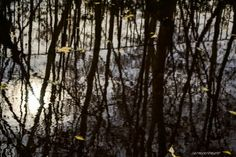 "Titulo: ""Lago"" Foro: REFLEJOS Autor: Carmen Romero Fotógrafo amateur Pais: España Perfil: http://galeria.blipoint.es/carmenromero/"