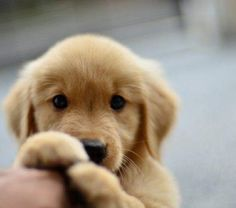 Goodness gracious. What a cute pup. I might have already pinned this one, but it's so darn cute, I couldn't pass it up!