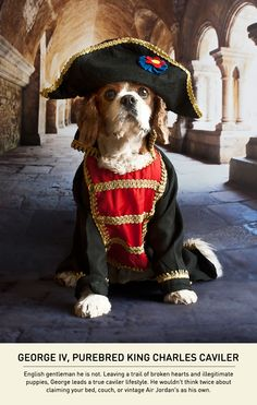 Dogs With A Napoleon Complex - Carmichael Collective  . . . I am in LOVE! ❤ Soooo much cuteness!