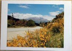 Fotopostkarte blühende Landschaft mit Ginster
