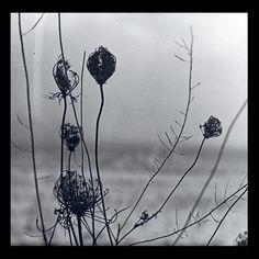 "Recondite – Placid 2x12"" Acid Test, Absurd Recordings – ATLP-06"