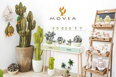 Succulent made in Italy, handmade.