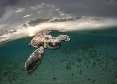 They are all entries for the natural world and wildlife categories in the 2017 Sony World Photography Awards - the world's largest photography competition. World Photography, Photography Awards, Animal Photography, Animals Beautiful, Cute Animals, Wild Animals, Tsitsikamma National Park, Turtle Love, Photos 2016