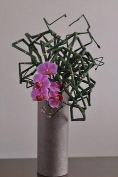 Equisetum hyemale #1                                                       …
