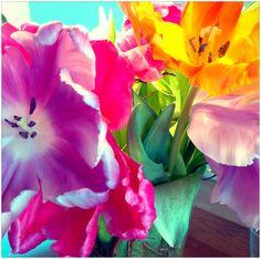 #DadaDesign #Agentur #Bonn #Blumen #Flowers #bunt #StilieundBlüte #Tulpe