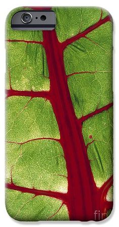 #Leaf Vein #iPhone 6s Case featuring the photograph Leaf Veins by D. Nunuk #giftidea #phonecase