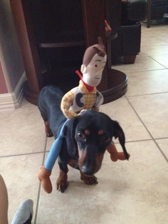 I really regret getting rid of the kids Woody, Jessie and Buzz dolls. I would have loved to take pics like this with their dogs. -Cindy