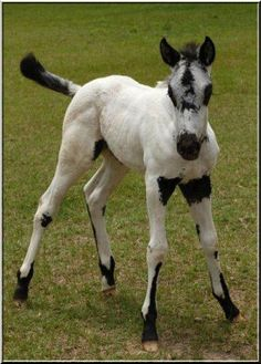 Wobbly foal with unique color pattern