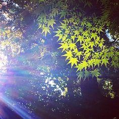 Shiba Koen Tokyo 9-Nov Www.Couchflyer.com #gf_Japan #japan_daytime_view #nature_archive #phos_japan #ig_japan #bestjapanpics #icu_japan #bestjapanpics #gf_nature #wp_japan @icu_japan @japan_daytime_view @_photo_japan_  @art_of_japan @instagramjapan @wp_japan @japan_of_insta @lovers_nippon #nature_brilliance #ig_myshot #tv_nature #ig_color #rsa_nature #outdoors #bestnatureshots @team_jp @leaveonlyleaves @igersjp