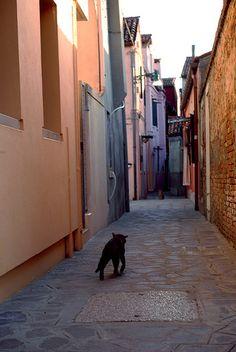 el callejón de los gatos