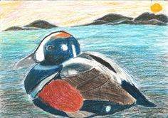 The 2013 Florida Junior Duck stamp of Nicole Sandt, 9, honorable mention in Group 1, grades K-3. DDWS photo