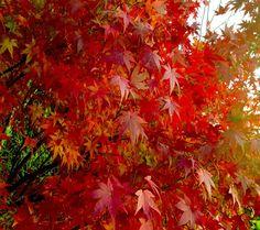 Red Autumn (1072×953)