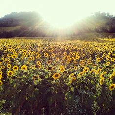 """""""Hello sun"""" in Poggio Berni - Instagram by @n_montemaggi"""