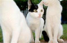 Types of Flea & Tick Control Products | Pet360 - Pet360 Pet Parenting Simplified