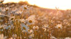 Late SunLight by Ingmar Hoogerhoud on 500px