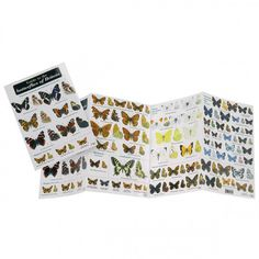 Field Guide to the Butterflies of Britain (5.99 GBP)