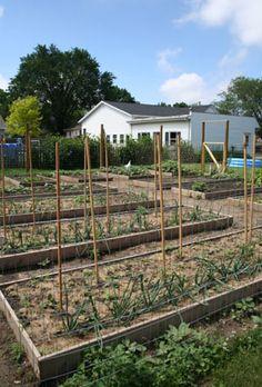 Garden Planning 101 - HOMEGROWN