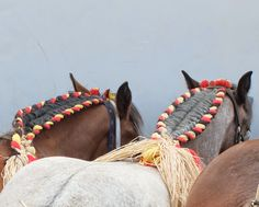 draft horse tricolor