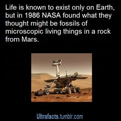 In 1986 NASA Found Fossils On Mars