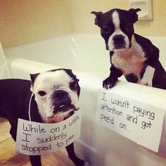 Lifes ruff get a dog (49 photos)