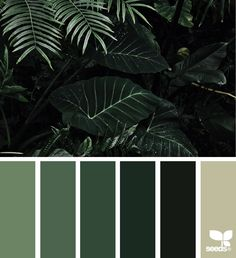 Jungle McCoy's Building Supply is your place for interior and exterior paint. { color jungle } image via: Building Supply is your place for interior and exterior paint. { color jungle } image via: Colour Pallete, Colour Schemes, Color Palettes, Jungle Images, Forest Color, Interior Paint Colors, Interior Painting, Painting Doors, Green Paint Colors
