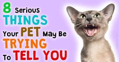 Your pets can't talk, but if they could, you'll be surprised that there are many things they might tell you. http://healthypets.mercola.com/sites/healthypets/archive/2015/03/14/interpreting-pets-thoughts-feelings.aspx