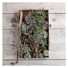 West Elm Succulents, Small Assorted ($23) ❤ liked on Polyvore featuring home, home decor, floral decor, green, glass planters, west elm, succulent glass terrarium, succulent plant terrarium and glass home decor