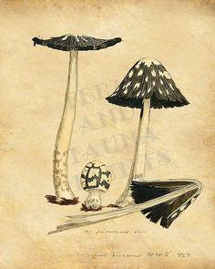 Image result for vintage cookbook artwork mushroom