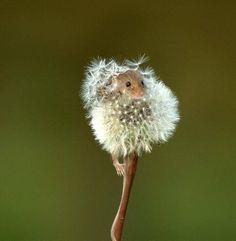 CUTE LITTLE MOUSE - Perfect Hiding Spot, Just Don't Sneeze